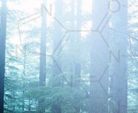 Εικόνα ενός δάσους με χημικά σύμβολα από πάνω