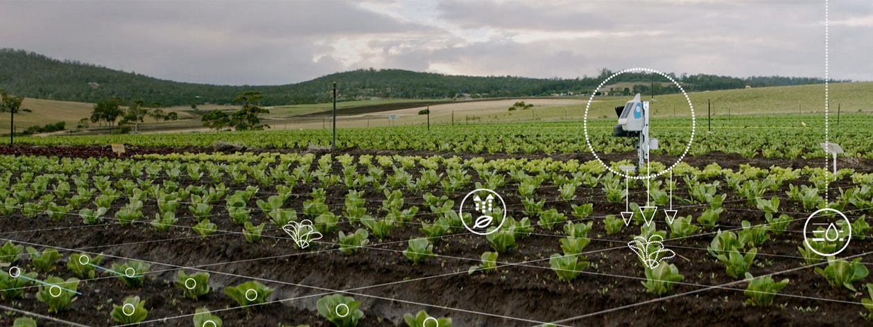 Agricultural field using artificial intelligence sensors