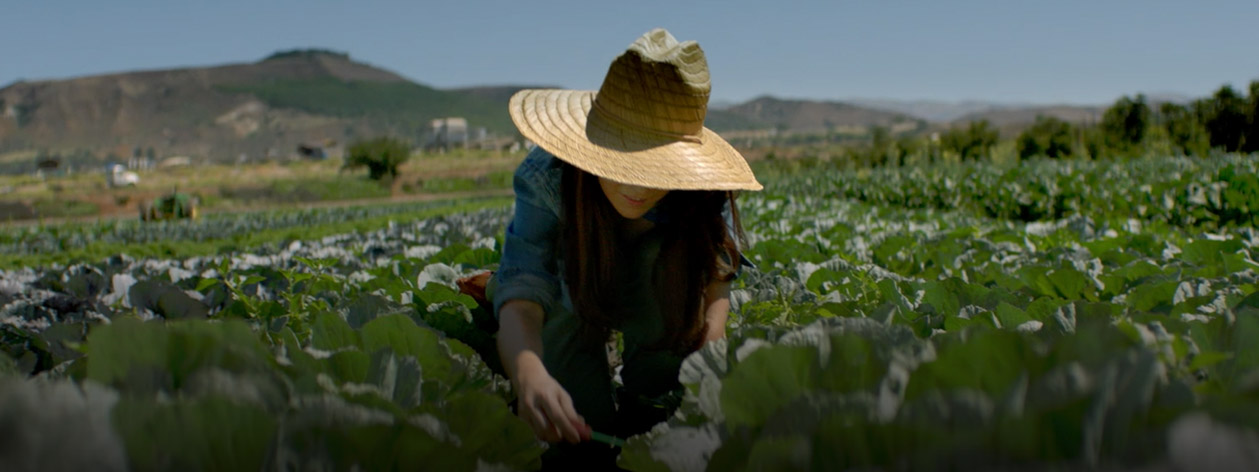 Female farmer with hat working in a field