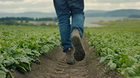 In dem Video zeigen einige Landwirte, wie die intelligente Cloud die Landwirtschaft revolutioniert.