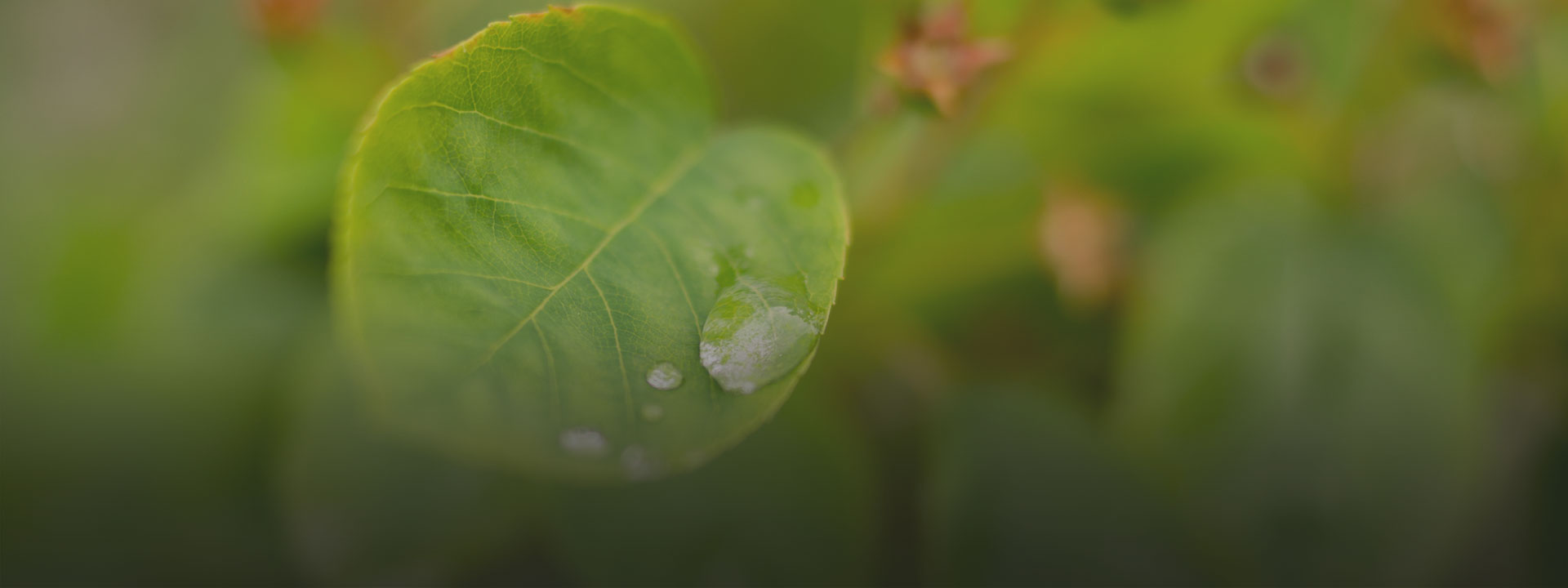 Leaf, learn how we support environmental sustainability