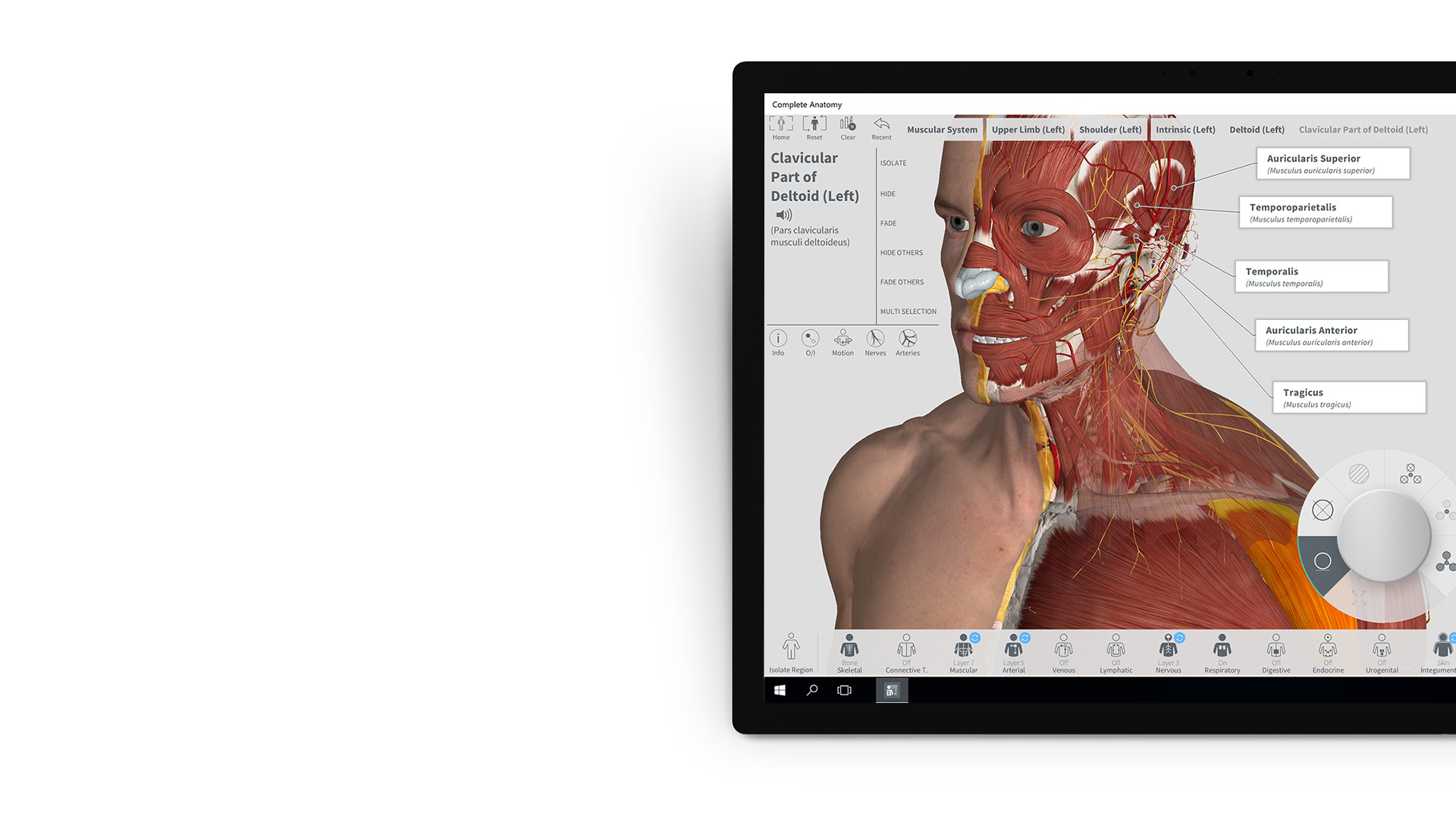 Complete Anatomy app on Surface device.