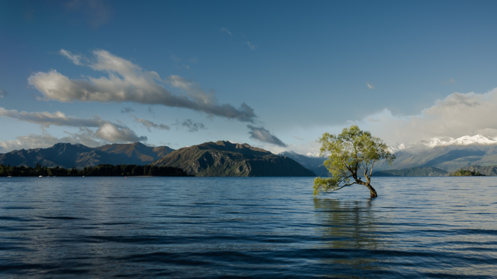 Tree in middle of lake with mountains behind