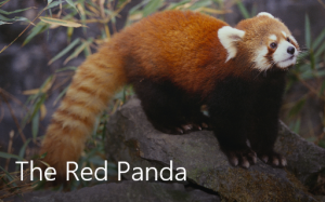 07A. Demo Sway tile - Red Panda