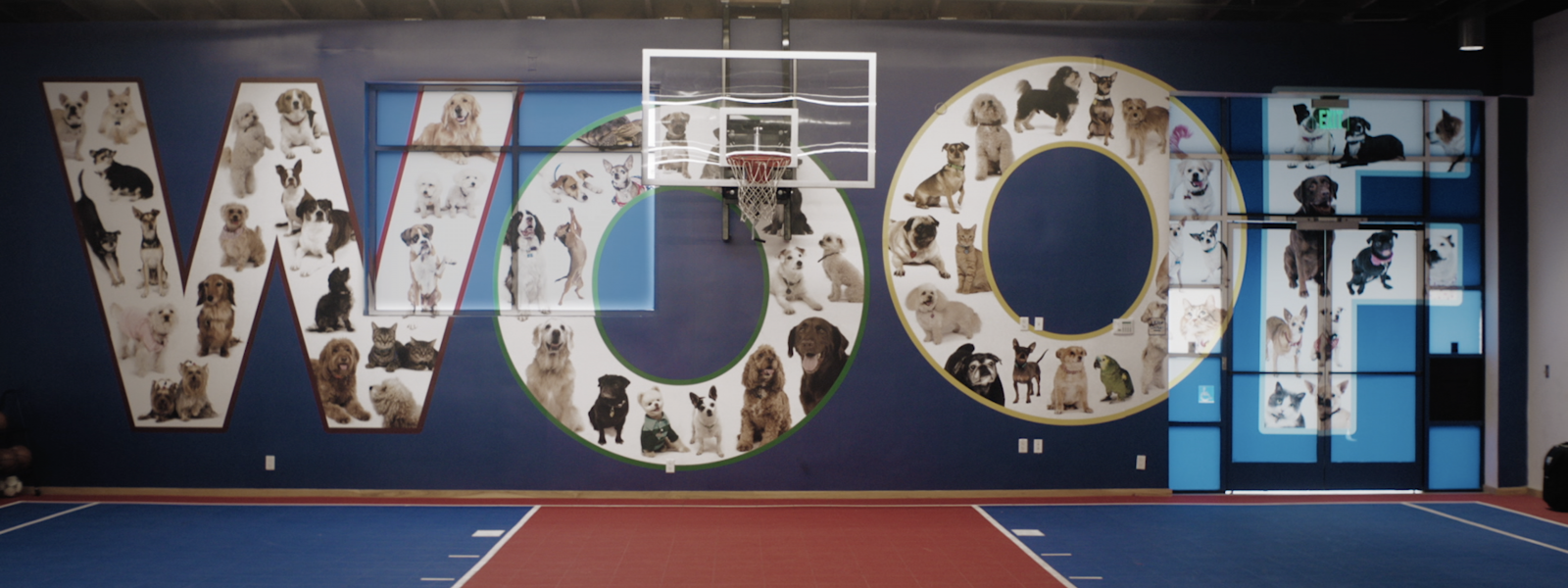 The letters W O O and F appear behind a basketball hoop in a gymnasium. Within each letter are pictures of pets.
