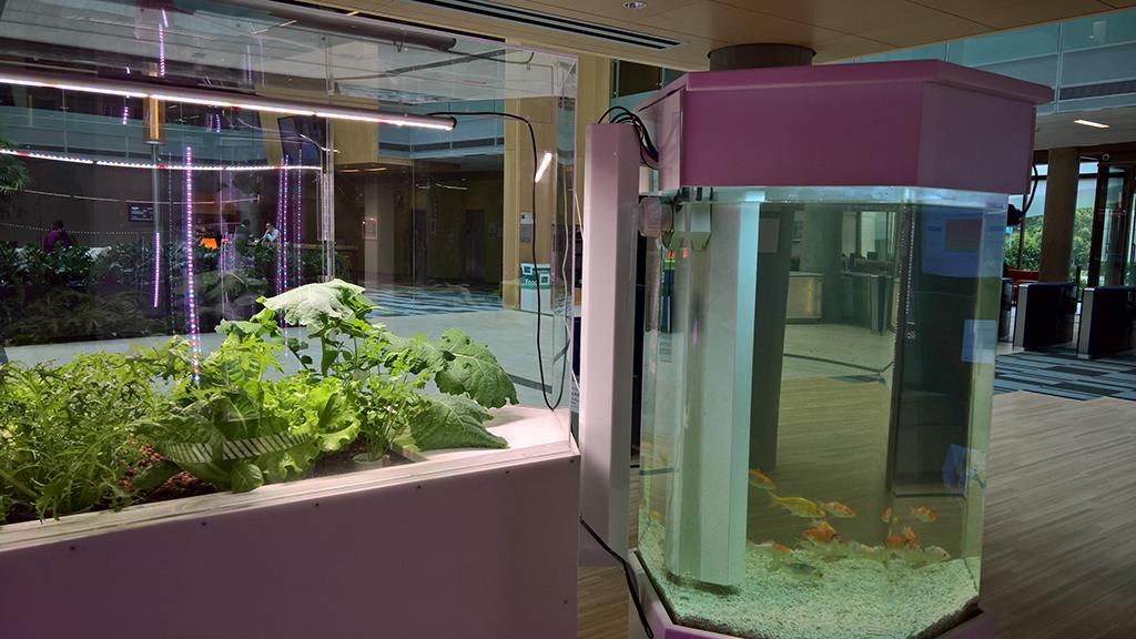 'Food Futures' Artist in Residence exhibit
