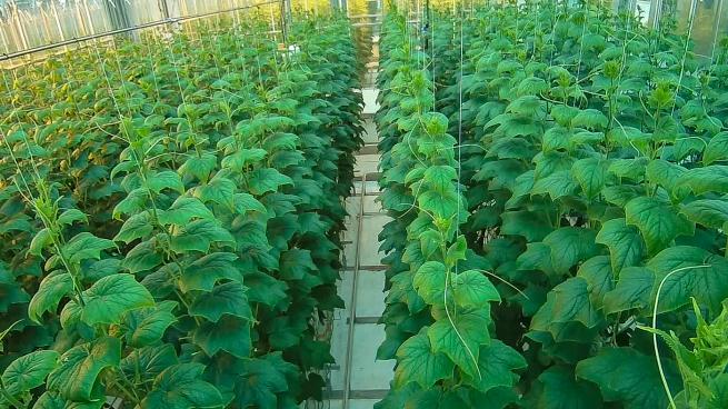 Project Sonoma Greenhouse