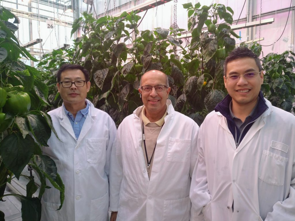 From left: Research scientist Xiuming Hao, greenhouse vegetable specialist Shalin Khosla and Tran at Agriculture and Agri-Food Canada's Harrow Research and Development Centre in Ontario