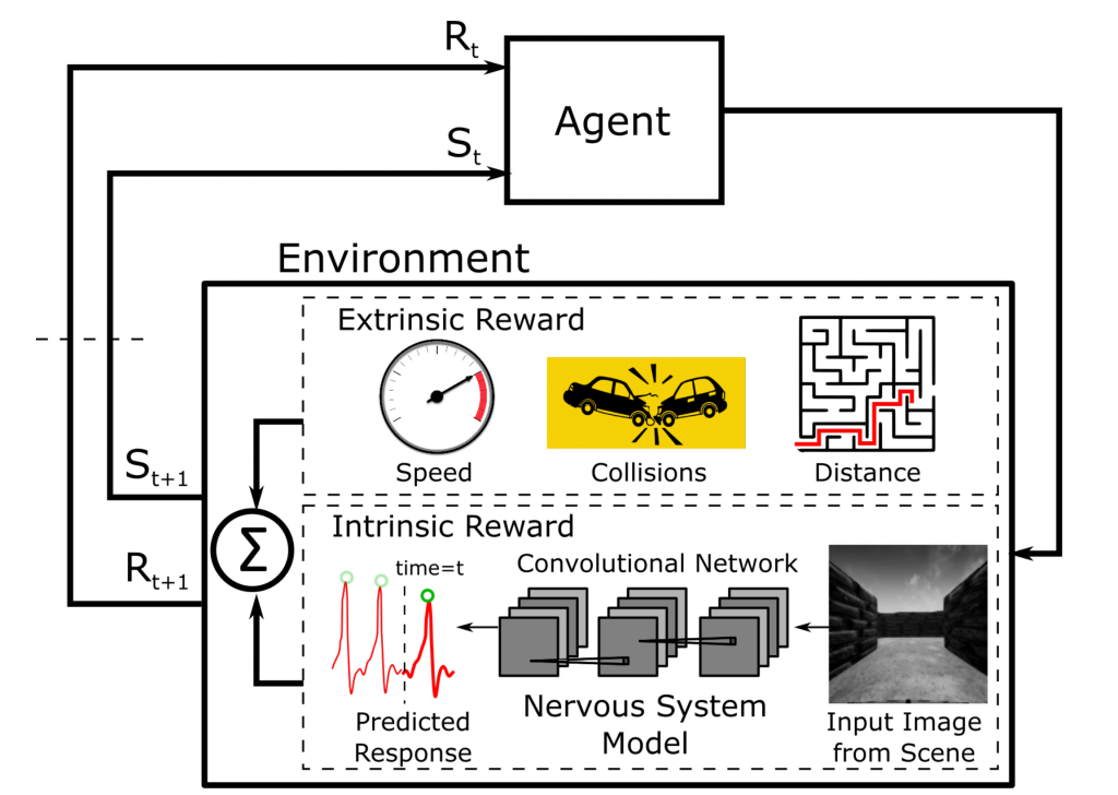 Visceral Machines are a novel approach to reinforcement learning that leverages neural networks trained on physiological signals to mimic autonomic nervous system responses. Such signals then are used as intrinsic reward mechanisms to train agents that can learn to accomplish various tasks.