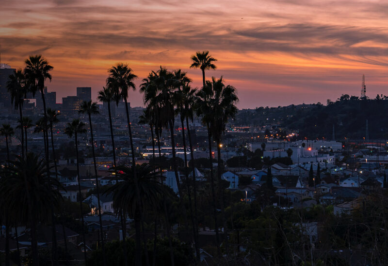 Sunset of skyline and palm trees inLos Angeles