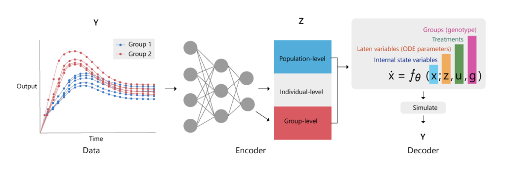 Figure 1: Structure of a variational autoencoder for hierarchical dynamical systems. The goal is to approximate the posterior distributions of the ordinary differential equation variables z, which include population-level (blue), individual-level (black) and group-level (pink) variables. An encoder neural network is trained to convert observational data Y, inputs u, and group memberships g into the variational approximations (parameters μ and σ) for each variable z_j. By decoding these parameters via the ordinary differential equation model, we obtain a reconstruction of the data, which provides an objective for learning.