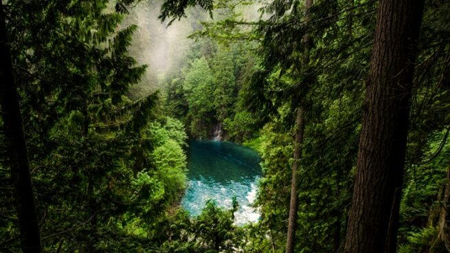 AI for Earth: image of a lake in the forest