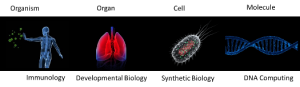 biologicalcomputation