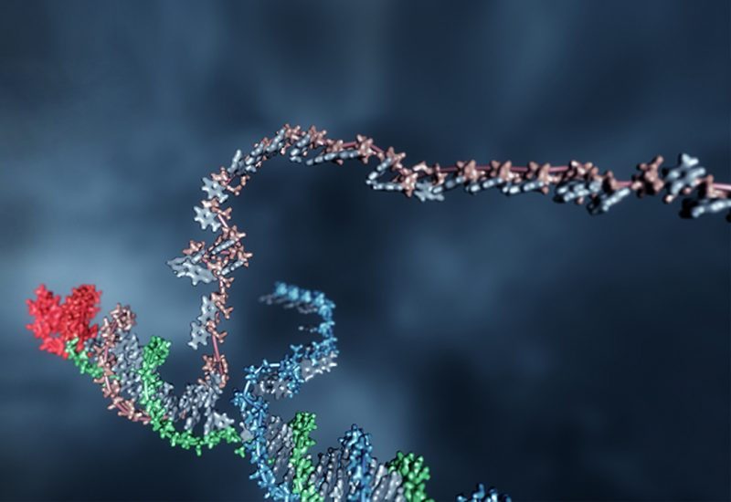 Programming DNA Circuits