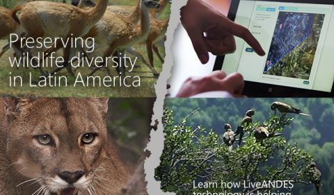 Image attached to LiveANDES: Latin American Researchers Use Data to Raise Awareness, Protect Species