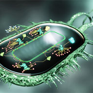 Program-a-Biological-Computer