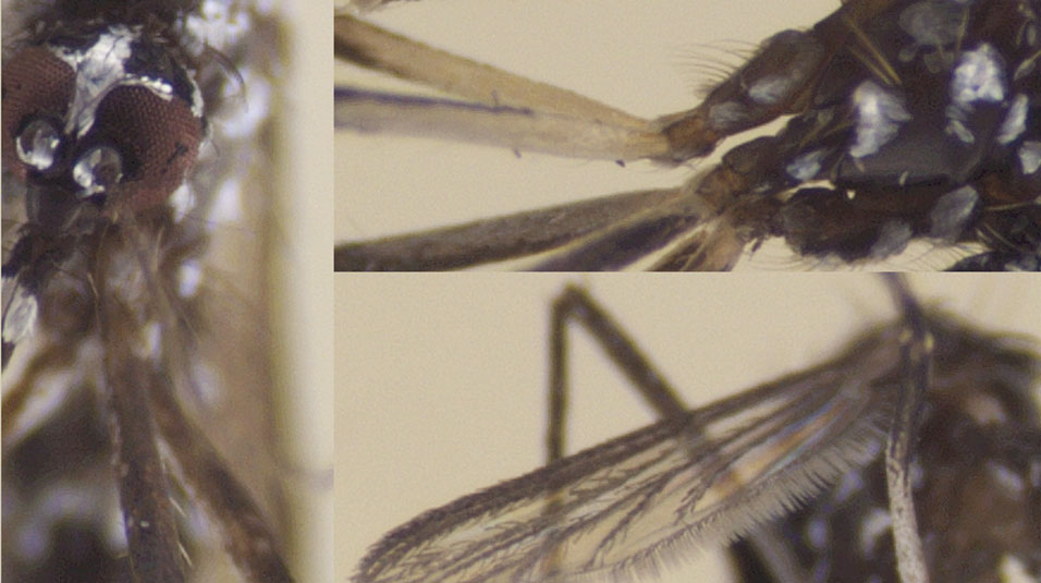 Project Premonition: Captured mosquitoes
