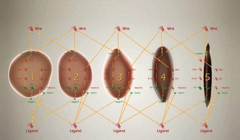 Bio Model Analyzer image