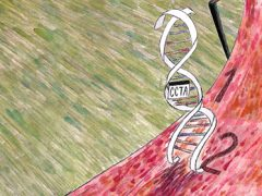 Scientists use machine learning to predict DNA binding rates from sequence
