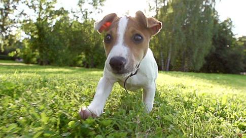 Un chien courant dans un champ