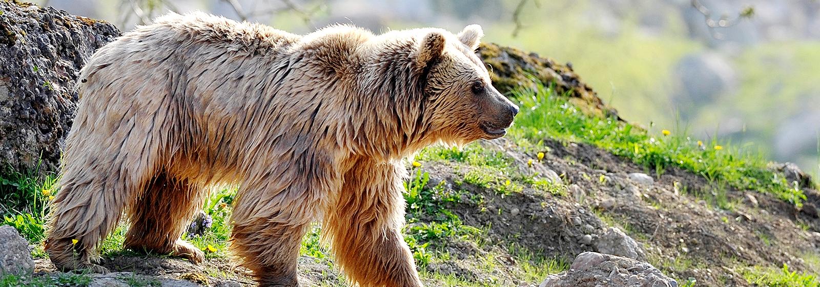 Le cloud et SharePoint ont permis de simplifier d'un seul coup le travail quotidien au parc naturel et animalier de Goldau. Il est désormais possible de traiter plus rapidement les demandes des clients et même les gardes forestiers non informatisés bénéficient de retombées positives. Lisez l'article.