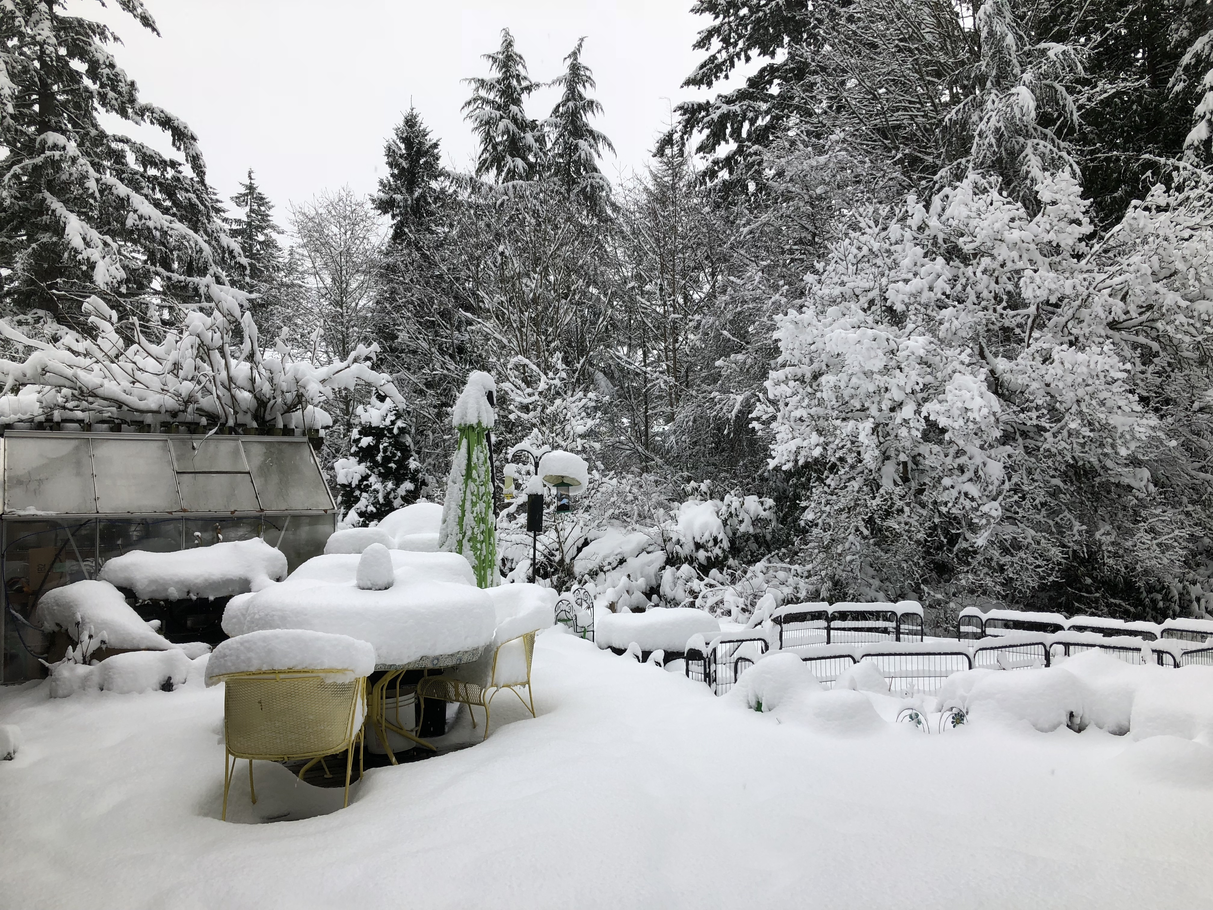A snow-covered deck with a patio table and fence rail all buried by untouched snow at least one-foot deep. The background is filled with tall conifers all covered in heavy snow.