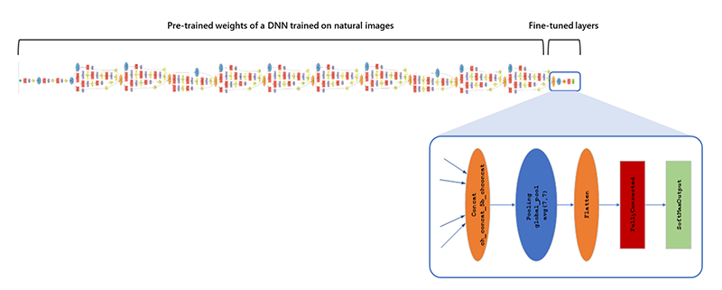 Diagram showing a DNN with pre-trained weights on natural images, and the last portion fine-tuned with new data